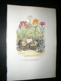 Grandville des Animaux 1842 Hand Col Print. Insects Playing Music To Flowers, Tulip